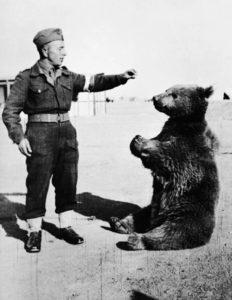 wojtek bear 1